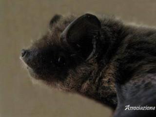 Storie di pipistrelli