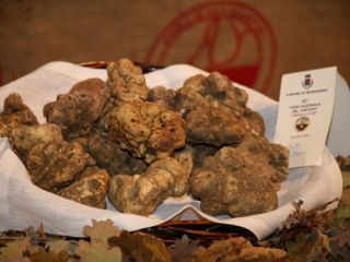 White Truffle Fair in the Ghenza Valley