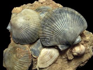 Museo Paleontologico Territoriale dell'Astigiano