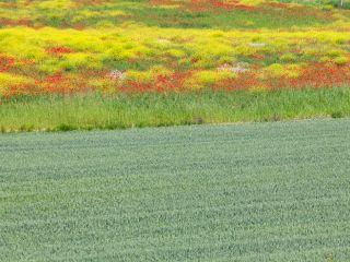 Casale Monferrato va in bici fra pianura e colline