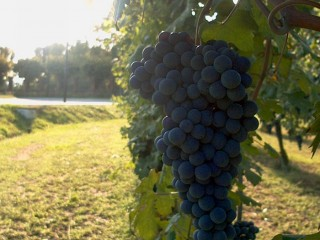 Sulle strade della lana e del vino
