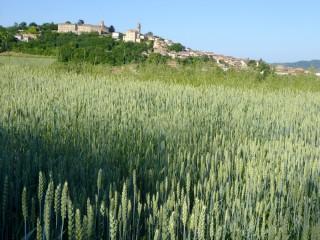 Montiglio Monferrato - pieve di San Lorenzo